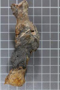 Najstarszy zmumifikowany przypadek haluksów ze starożytnego Egiptu